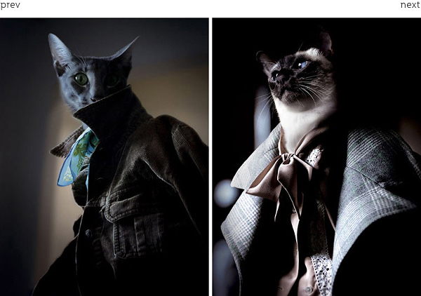 люди-коты