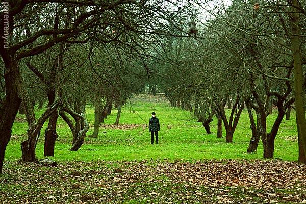 Человек и деревья