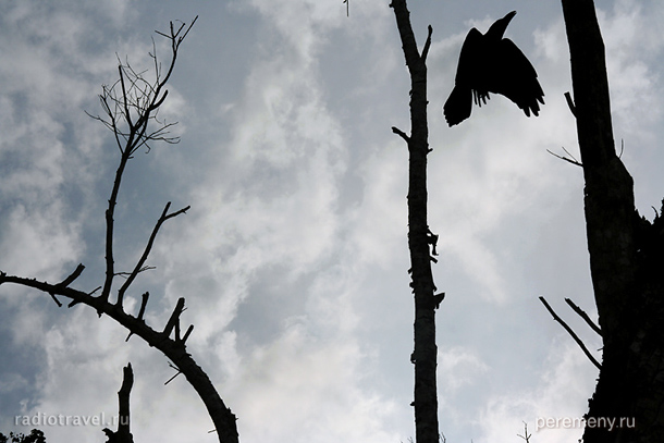 Ворон. Фото: Глеб Давыдов