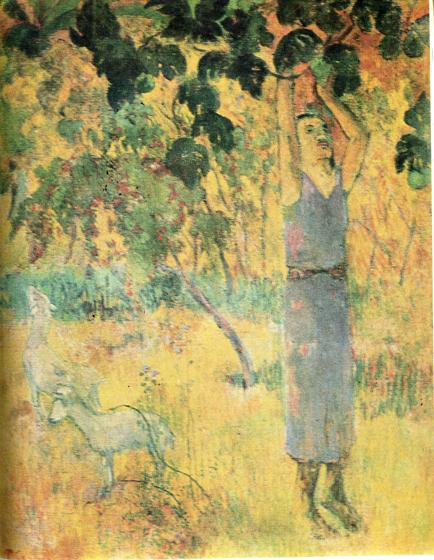 42. Сборщик плодов. 1897 (Мужчина,  срывающий плоды с дерева. Эрмитаж, инв. № 9118). Год неразборчив на этой картине, где мы снова, как на «Тарари муруру», видим коз. Грубое исполнение и мутные краски позволяют, однако, заключить, что картина писалась, когда Гоген болел и не мог работать в полную силу. Скорее всего, она создана в 1897 году. Гоген тогда часто страдал от сильных недугов, даже пытался покончить с собой, чтобы избавиться от мучений.