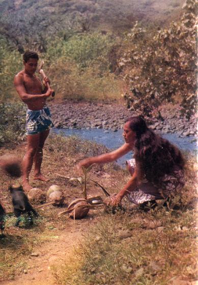 79.                     Кто не узнает черных полинезийских свиней с картин Гогена? Их на островах множество, и они причиняют большой вред, роясь на огородах. Стоит туземцам приняться за заготовку копры, и они тут как тут.