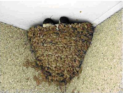 Глиняное гнездо