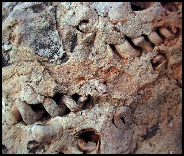 Известняк. Отпечатки омертвевших существ. Фотография: Paul Grand/Flickr.com