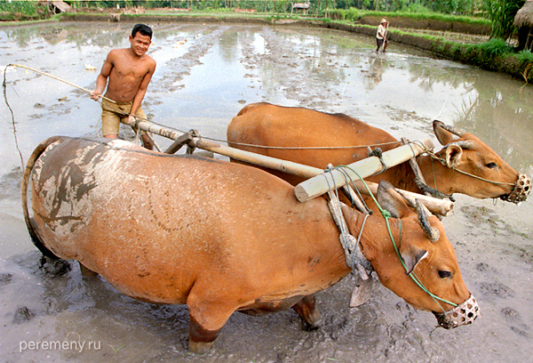 Земледелие в Индонезии. Фото: Аркадий Колыбалов