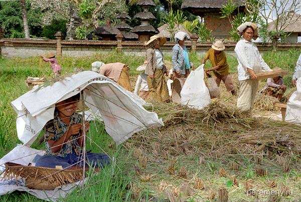 Индонезия. Фото: Аркадий Колыбалов