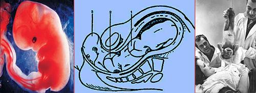 Роды: зародыш, прохождение плода через родовой канал, и вот результат: новорожденный