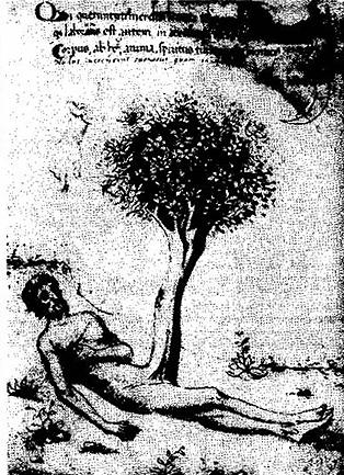 Адам, первичная материя после грехопадения, демонстрирует творческий половой фаллос в форме философского древа