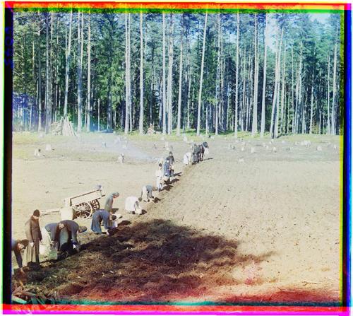 Русские монахи работают в поле. Фото Прокудина-Горского