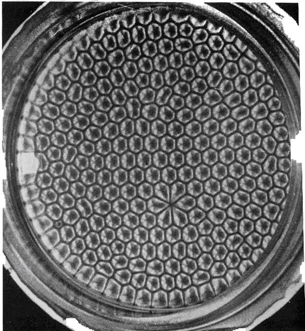 Ячейки Бенара. В местах неоднородности поверхности пластины видны неравномерные ячейки