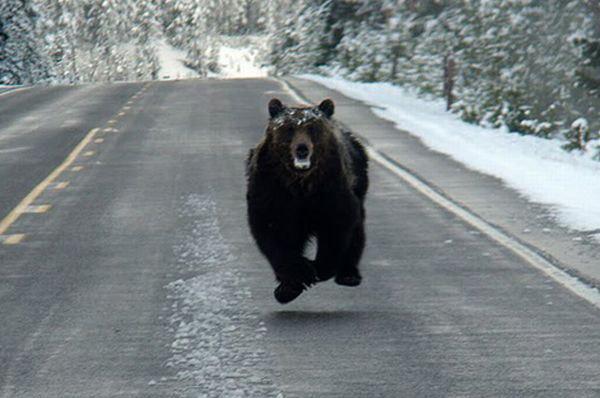 Русская весна, медведь проснулся