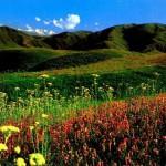 Новый Туркестан, Новый Халифат и Новая Хазария. Концептуальная записка