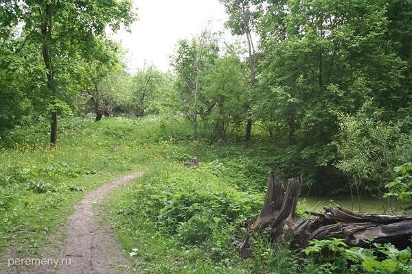 Тропинка через лес. Фото Евгения Марлинского
