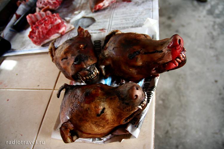 собачьи головы, Нинх Бинх, Ninh Binh