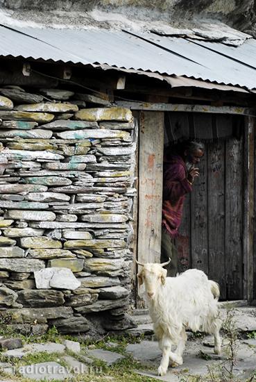 баба и его коза, жизнь индийского отшельника