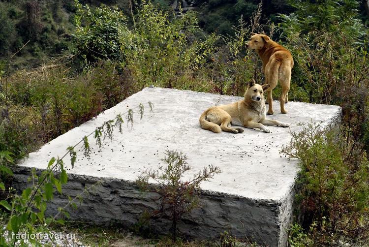 могила гуру, Индия