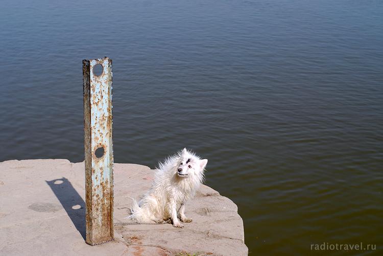 Собачонка из Ганги