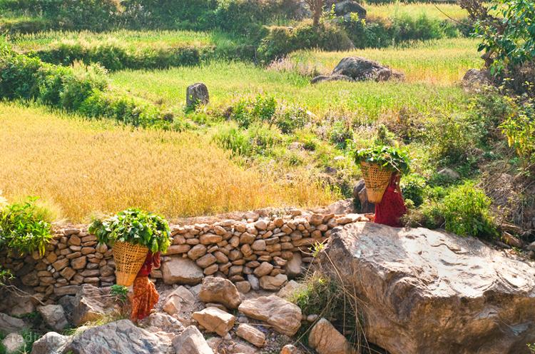 сельский Непал