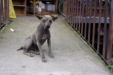 Черный пес. Фото: Глеб Давыдов