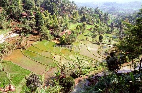 Рисовые терассы. Индонезия. Фото: Аркадий Колыбалов