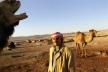 Сирия, Пальмира, верблюды