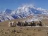 Тибет, горы