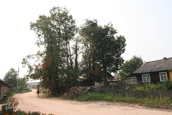 Маркуша. Деревья на месте Никольского монастыря