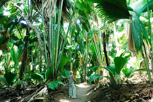 Vallee De Mai Forest_Raymond Sahuquet