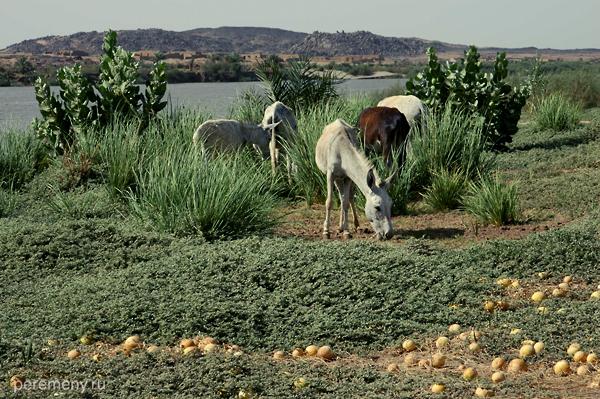 Нил - линия жизни для Судана