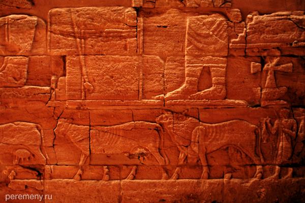 Тощему суданскому скоту негде разгуляться в пустыне