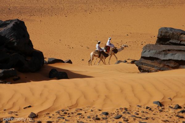 Верблюд - основной вид транспорта